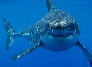 Shark_with_smile